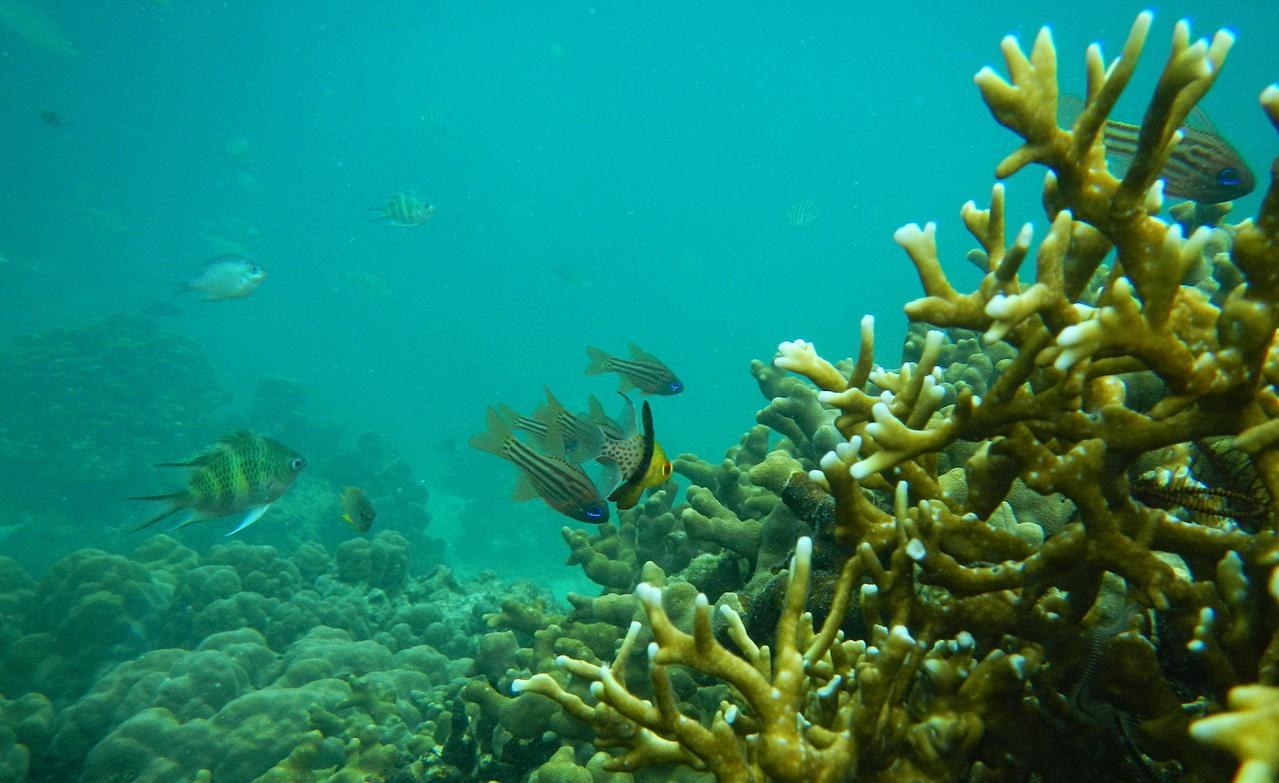 ikan-kecil-pulau-tegal